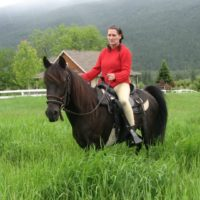 Re-homing Peruvian Mare, great for begginer