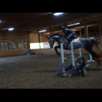 Lovely 16' Warmblood 3 Ring Potential