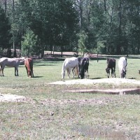 "Retire to ""Sunny"" South Carolina . A Nature Lovers Paradise on a 37 acre Horse Farm $524,700"
