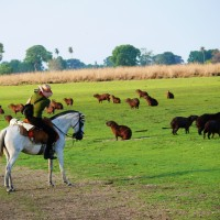 Horseback Riding Vacations in Brazil