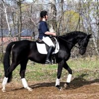 Stunning Athletic Versatile 7yo Mare!
