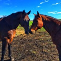 Equine Retirement & Board