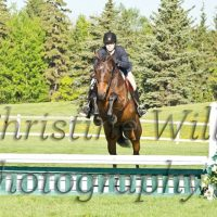 Show quality proven Dutch Warmblood for lease