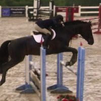 Experienced Jumper Available for Immediate Sale