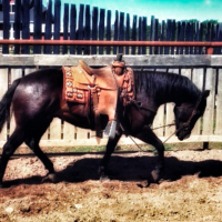 Black Gelding-Sells April 20, 2019 Claresholm AB