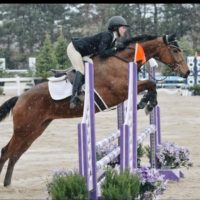 Stunning and very talented warmblood mare for sale