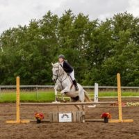Grey Thoroughbred Mare - Hunter Discipline