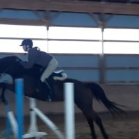 Jumper 15.1 TB Mare Available
