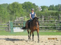 Training Level Eventer for sale