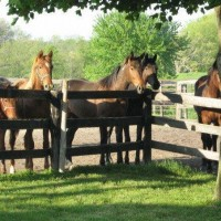 Horse Farm For Rent